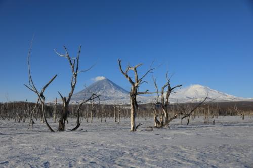 Мёртвый лес (03.04.21)