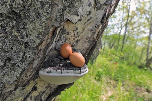 Кукушкино гнездо