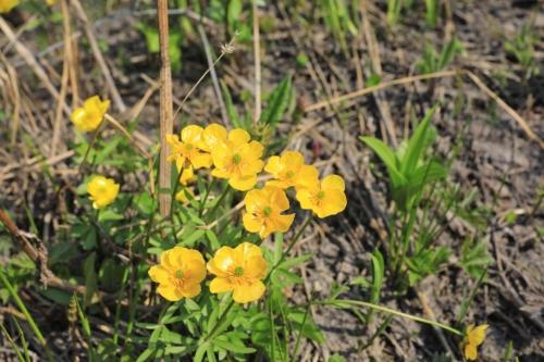 Цветы (02.07.21)